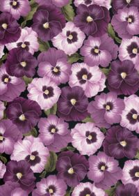 Patchworkstoff Stiefmütterchen lila