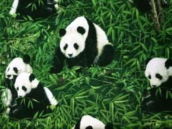 Patchworkstoff Quilt Stoff Giant Panda Pandas in Blättern