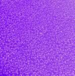 Patchworkstoff Quilt Stoff Catherines Vines Petunia violett DT-2598-2C-5